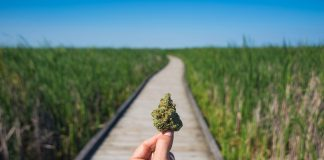 The Best Canadian Marijuana Stocks or Pot Stocks to Invest In